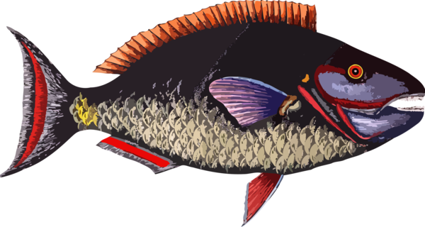Transparent Fish Fish Seafood Tail Clipart for Animals
