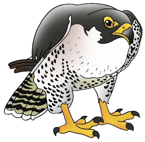 Transparent Bird Beak Bird Bird Of Prey Clipart for Animals