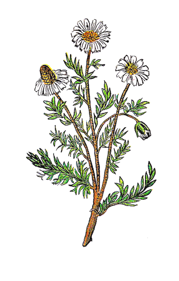 Transparent Bee Flower Plant Flora Clipart for Animals