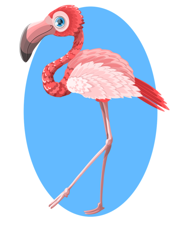 Transparent Bird Bird Flamingo Water Bird Clipart for Animals
