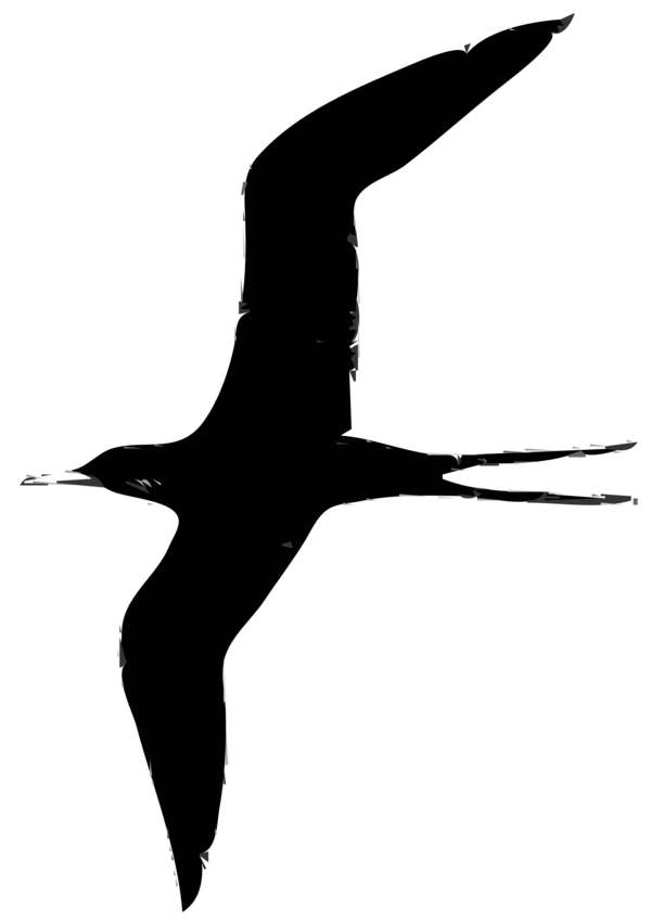 Transparent Bird Bird Black And White Beak Clipart for Animals