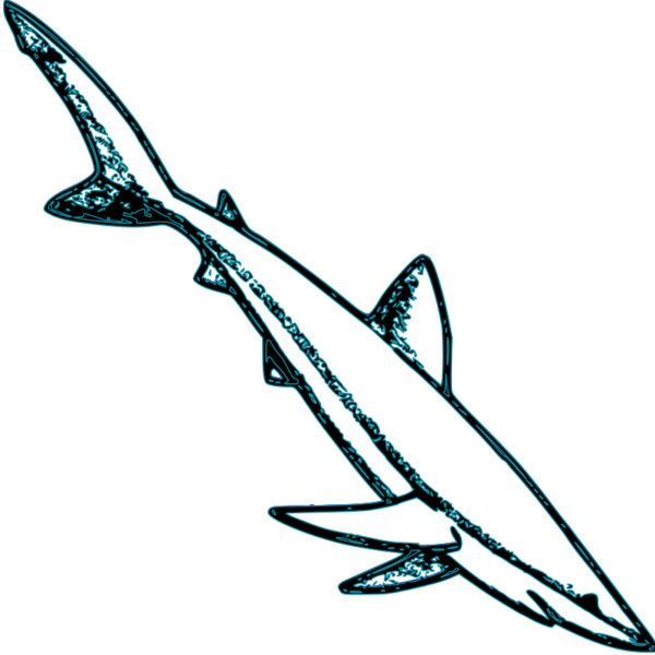 Transparent Dolphin Fish Fin Dolphin Clipart for Animals