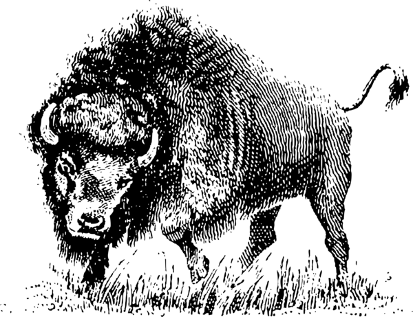 Transparent Cow Wildlife Bison Black And White Clipart for Animals