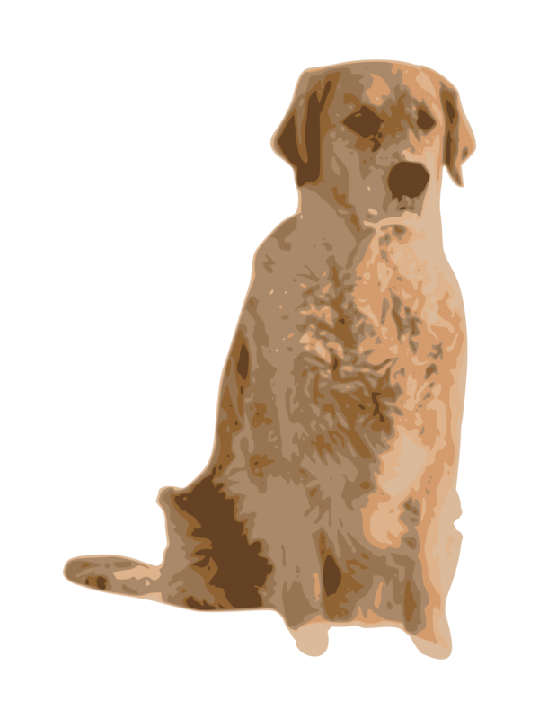 Transparent Dog Dog Retriever Snout Clipart for Animals