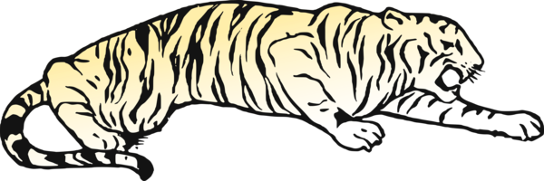 Transparent Bear Wildlife Tiger Line Art Clipart for Animals