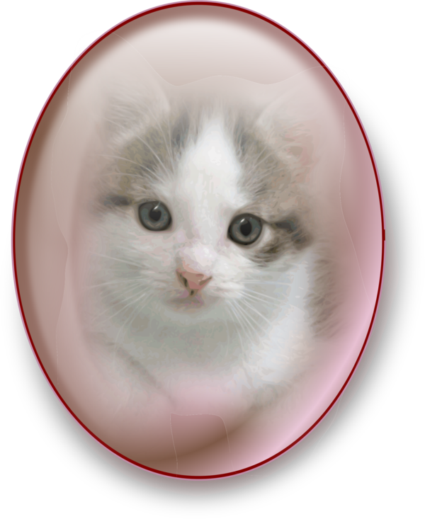 Transparent Cat Cat Whiskers Kitten Clipart for Animals