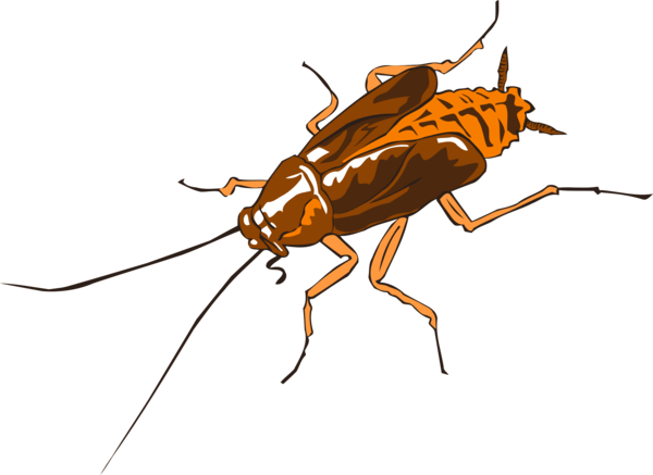 Transparent Insect Insect Pest Fly Clipart for Animals