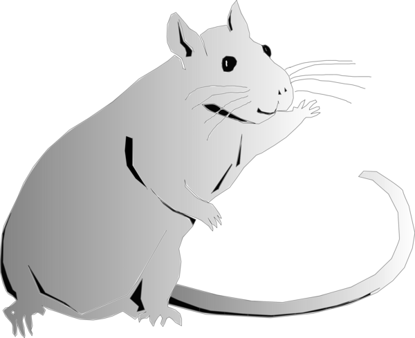 Transparent Cat Rat Black And White Mouse Clipart for Animals