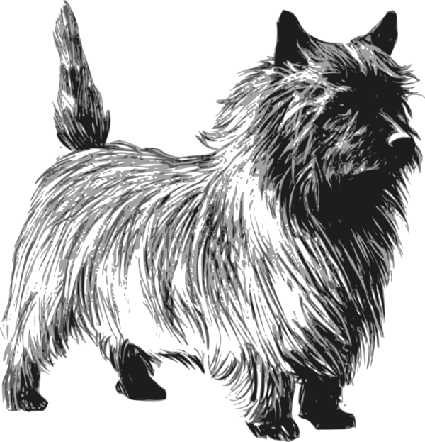 Transparent Cat Dog Black And White Cairn Terrier Clipart for Animals