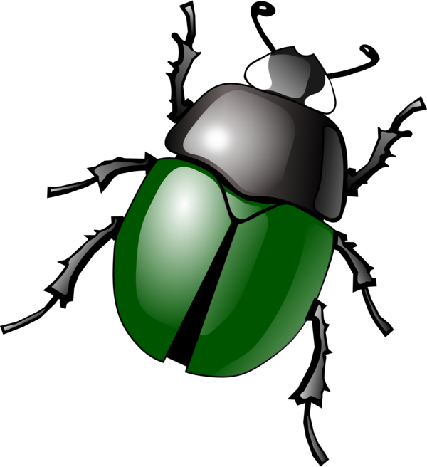 Transparent Insect Insect Beetle Leaf Clipart for Animals