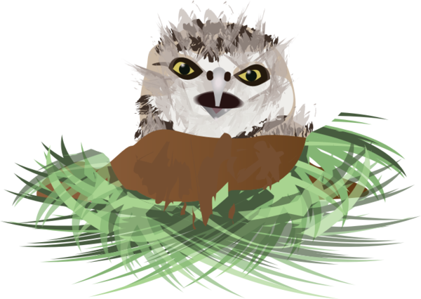 Transparent Bird Owl Clipart for Animals