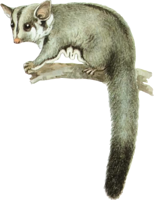 Transparent Cat Tail Cat Dormouse Clipart for Animals
