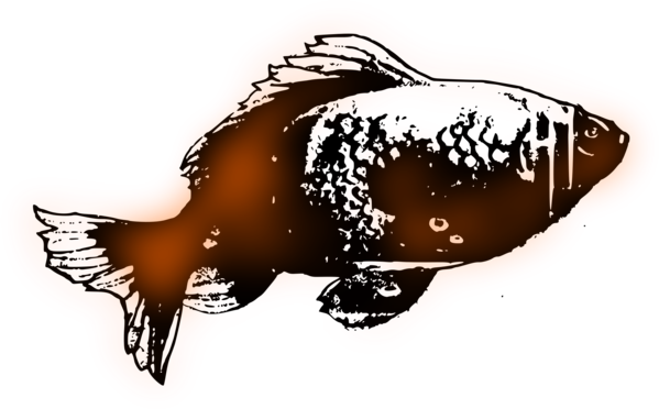 Free Fish Fish Clipart Clipart Transparent Background