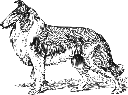 Transparent Dog Dog Black And White Line Art Clipart for Animals