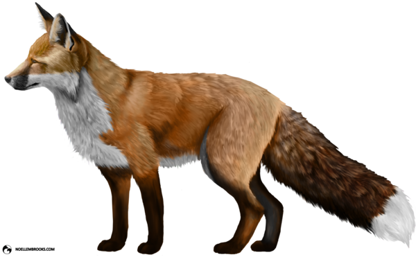 Transparent Fox Red Fox Fox Wildlife Clipart for Animals