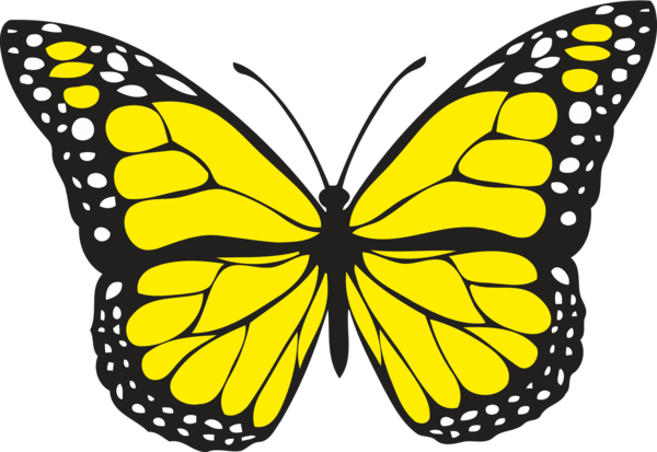 Cute Butterfly Clipart, HD Png Download , Transparent Png Image - PNGitem