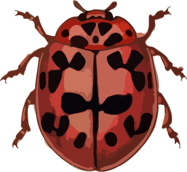 Transparent Insect Ladybird Beetle Insect Clipart for Animals