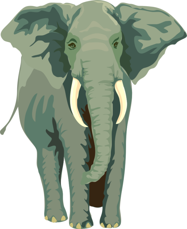 Transparent Elephant Elephant Indian Elephant African Elephant Clipart for Animals