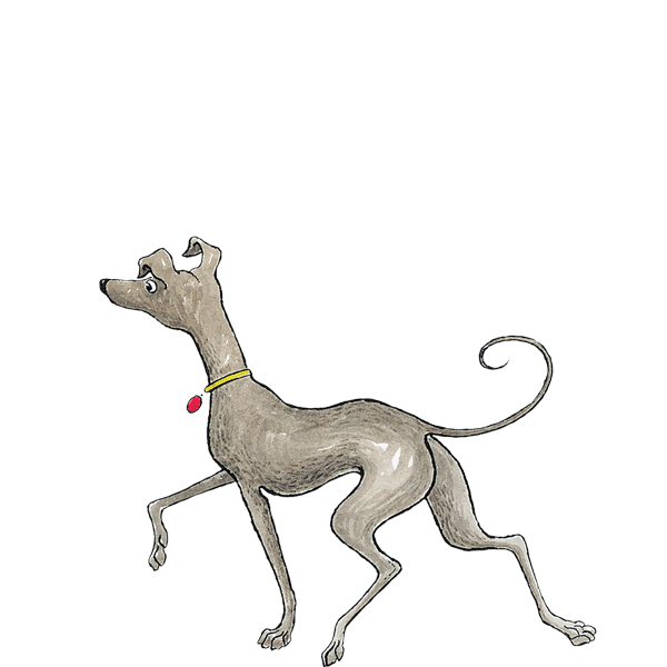 Transparent Dog Dog Italian Greyhound Whippet Clipart for Animals