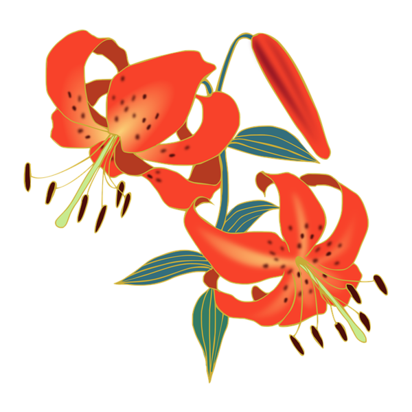 Transparent Tiger Flower Lily Plant Clipart for Animals
