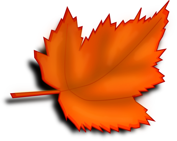 Transparent Autumn Leaf Maple Leaf Flower Clipart for Nature