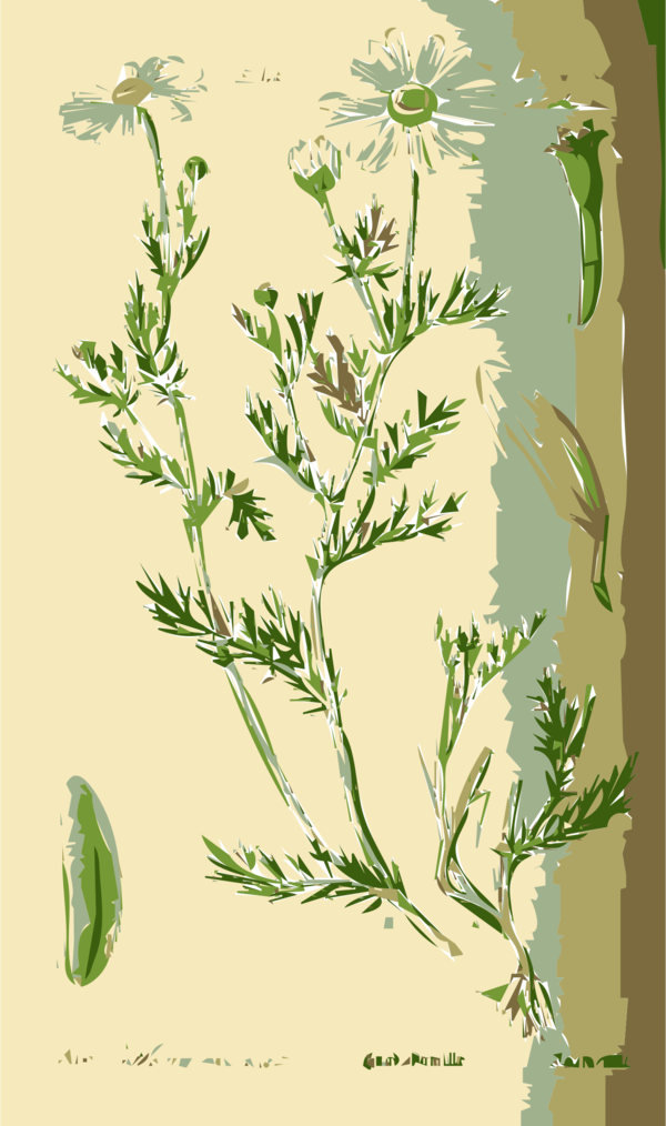 Transparent Family Plant Flora Flower Clipart for People