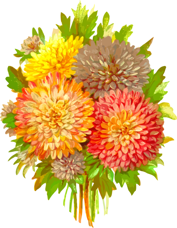 Transparent Daisy Flower Cut Flowers Dahlia Clipart for Flowers