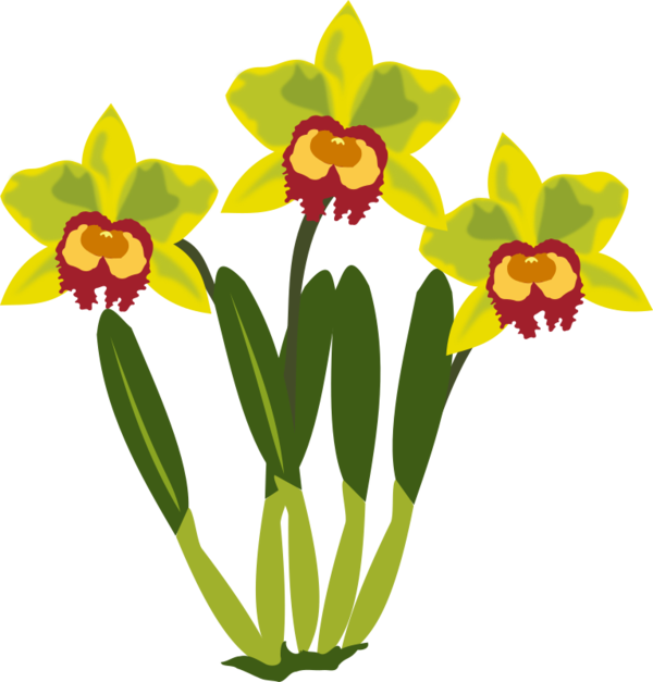 Free Daffodil Flower Plant Flora Clipart Clipart Transparent Background