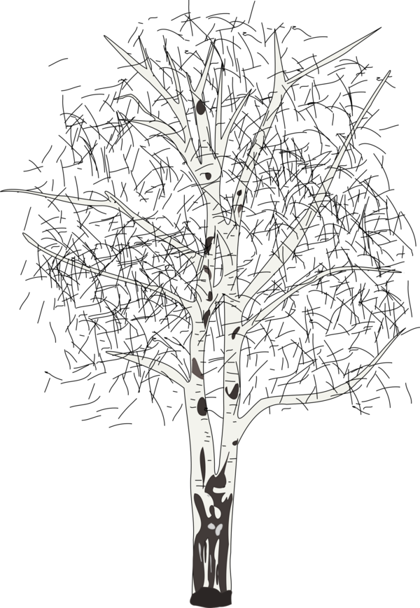 Transparent Tree Tree Black And White Branch Clipart for Nature