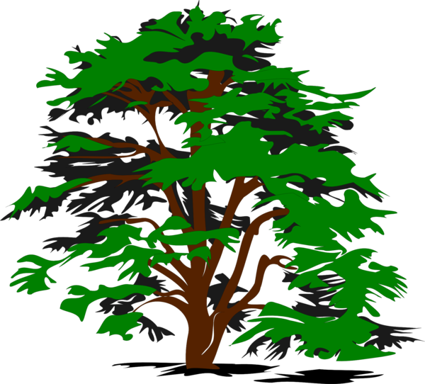 Transparent Leaf Tree Woody Plant Leaf Clipart for Nature