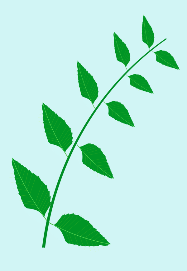 Transparent Tree Leaf Plant Branch Clipart for Nature