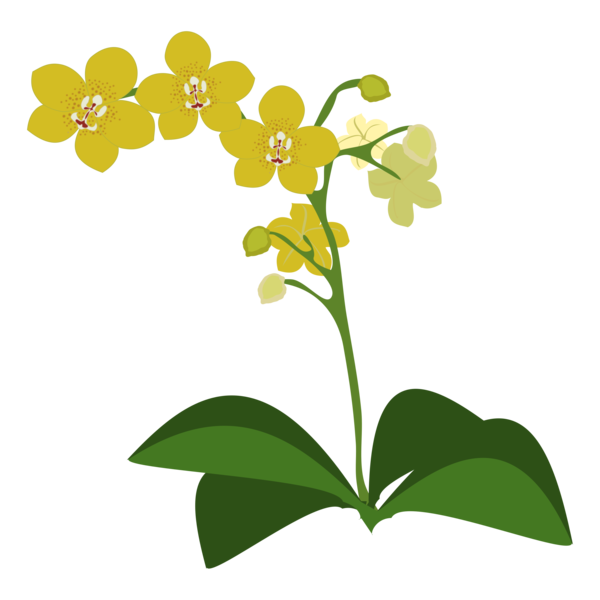 Transparent Orchid Flower Flora Plant Clipart for Flowers