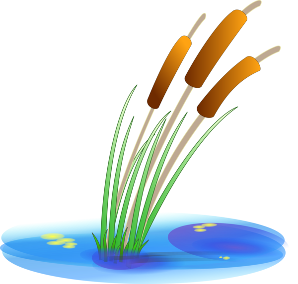 Transparent Water Line Grass Material Clipart for Nature