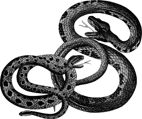 Transparent Snake Snake Reptile Serpent Clipart for Animals