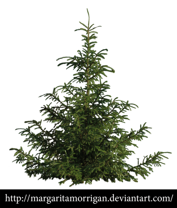 Transparent Christmas Tree Plant Spruce Clipart for Holidays
