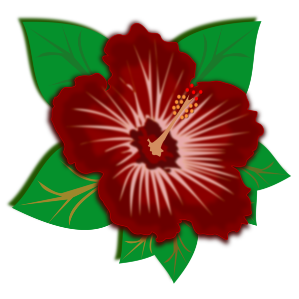Transparent Hibiscus Flower Plant Hibiscus Clipart for Flowers