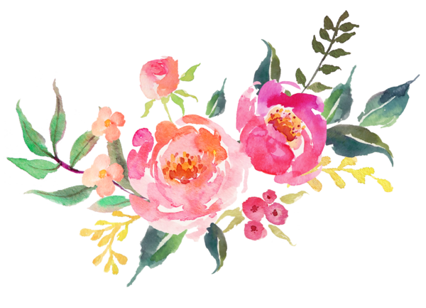 Transparent Peony Flower Plant Rosa Centifolia Clipart for Flowers