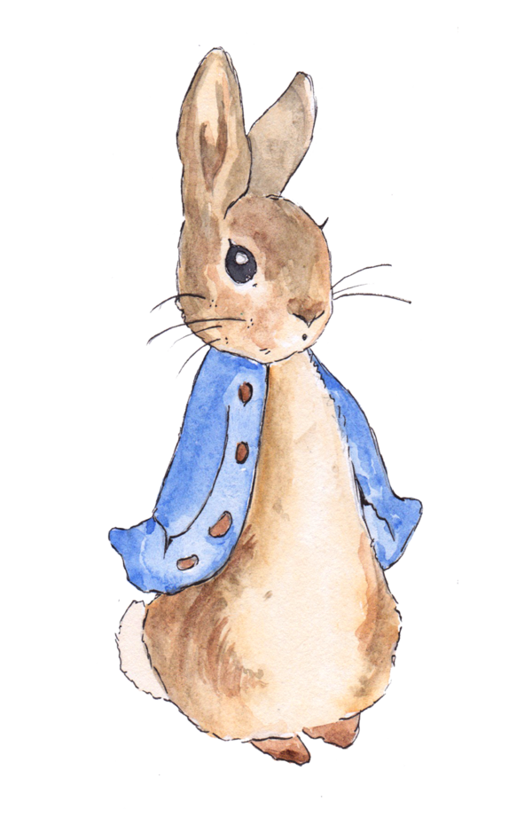 Transparent Rabbit Rabbit Hare Whiskers Clipart for Animals