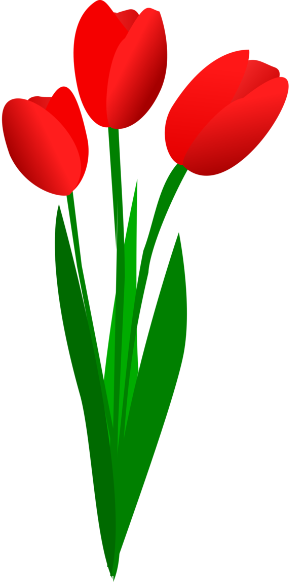 Transparent Lily Flower Plant Tulip Clipart for Flowers