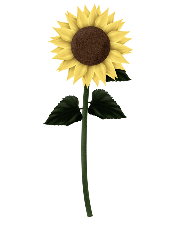 Transparent Sunflower Flower Sunflower Sunflower Seed Clipart for Flowers