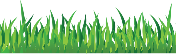 Transparent Family Grass Grass Family Plant Clipart for People