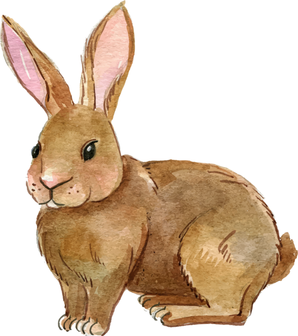 Transparent Rabbit Rabbit Hare Easter Bunny Clipart for Animals