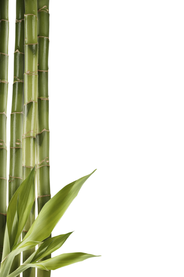 Transparent Family Bamboo Grass Family Plant Stem Clipart for People