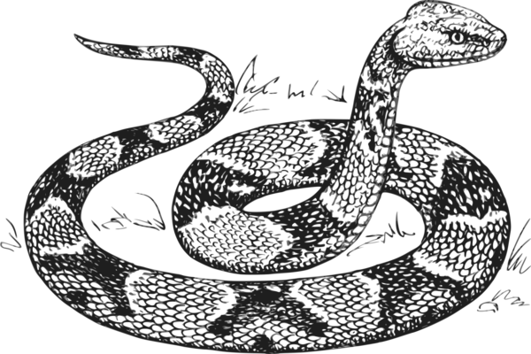 Transparent Snake Reptile Serpent Snake Clipart for Animals