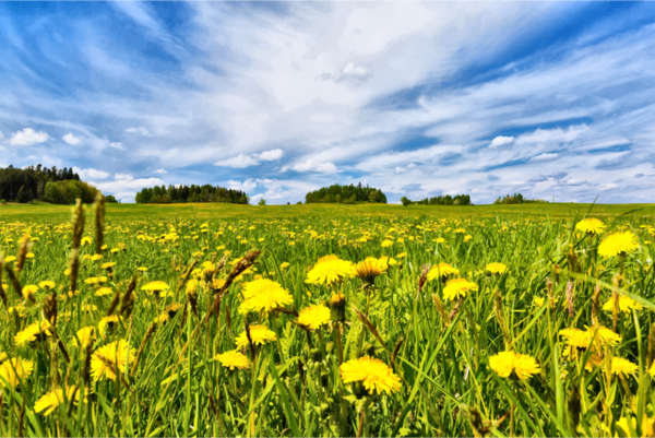 Transparent Spring Grassland Sky Meadow Clipart for Nature