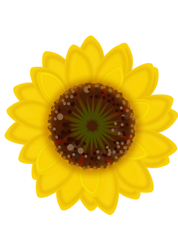 Transparent Gerbera Flower Sunflower Sunflower Seed Clipart for Flowers