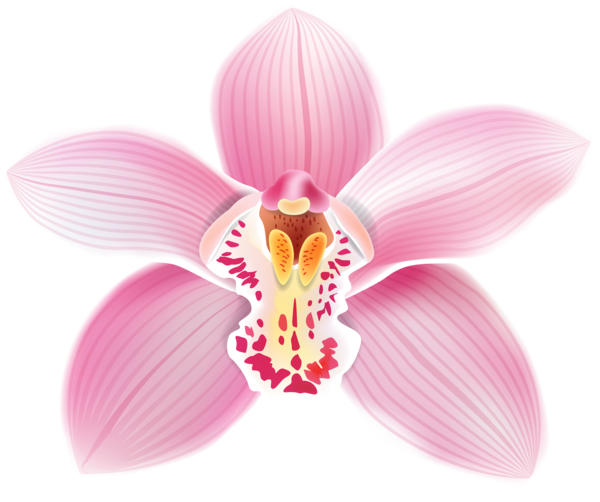 Transparent Orchid Flower Moth Orchid Plant Clipart for Flowers