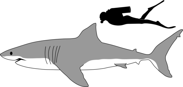 Transparent Shark Fish Shark Black And White Clipart for Animals