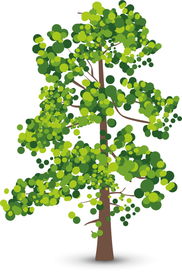 Transparent Tree Tree Woody Plant Plant Clipart for Nature