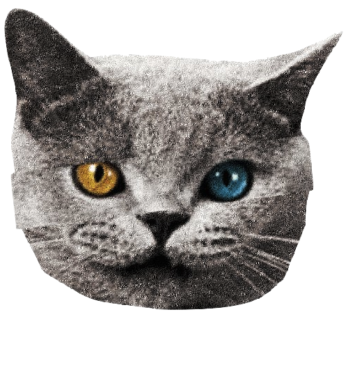 Transparent Cat Eye Korat European Shorthair Clipart for Animals